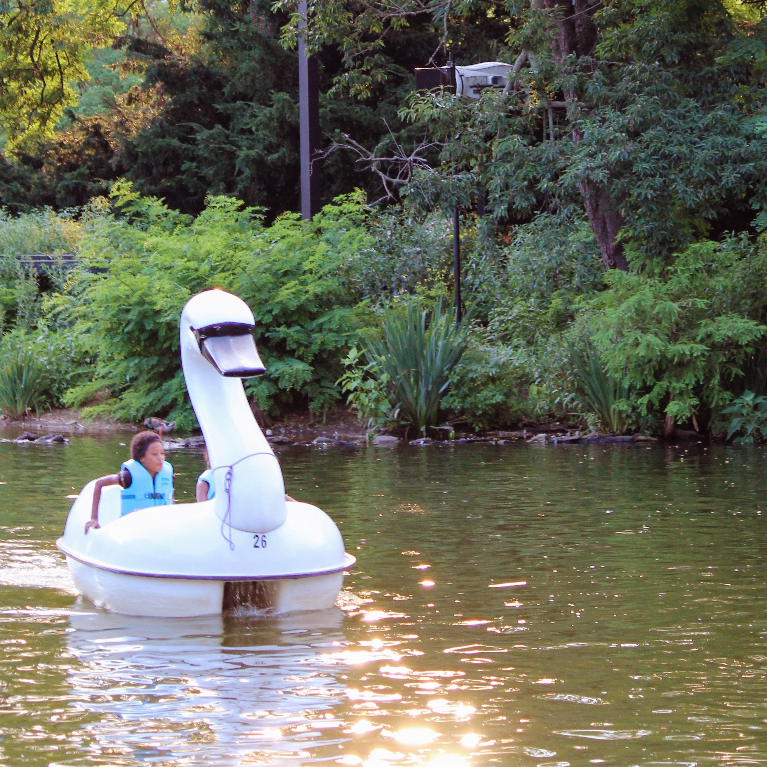 Attractions Swan Boats